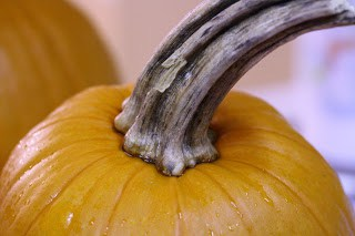 We bought a novel macro lens in addition to I mean value I Waste not, desire non – Pumpkin Puree