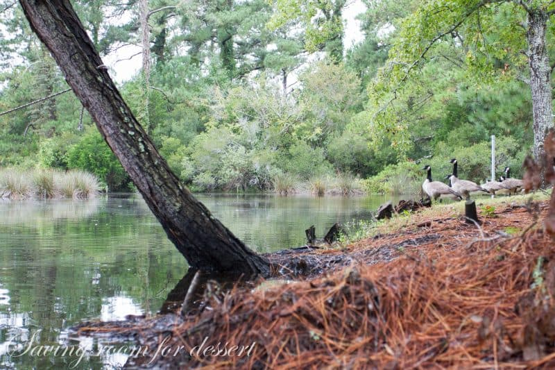 ve been completely off our normal routine Kitty Hawk Maritime Woods Reserve