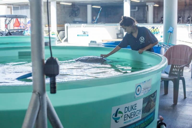 Clearwater Aquarium August 2015 II-1