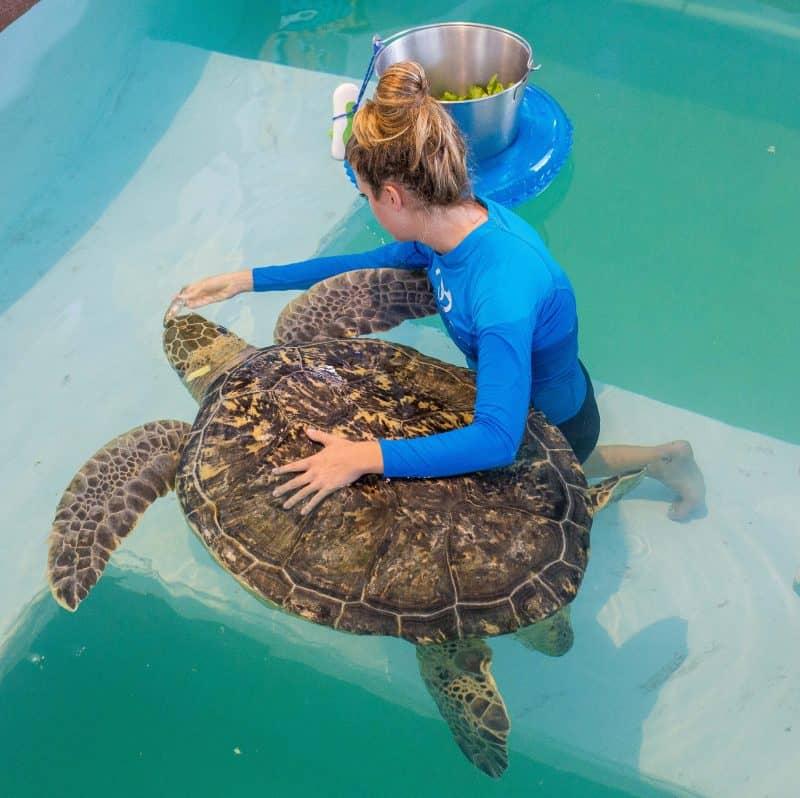 Clearwater Aquarium August 2015 II-6