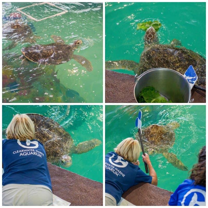 Clearwater Marine Aquarium 1