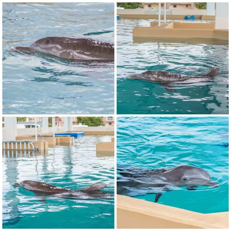 Clearwater Marine Aquarium 6