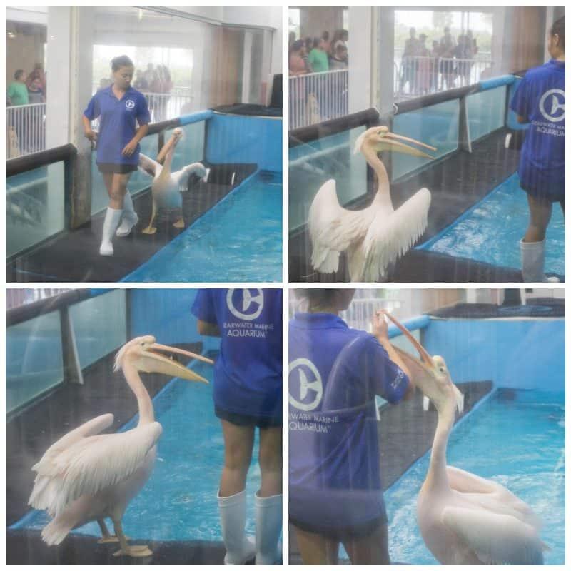 Clearwater Marine Aquarium 8