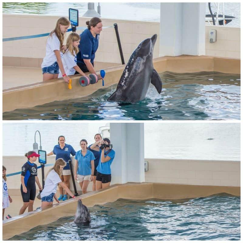 Clearwater Marine Aquarium 9