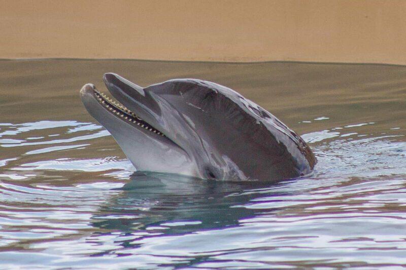 Clearwater Marine Aquarium FINALS-1