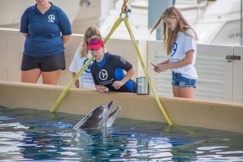 Clearwater Marine Aquarium FINALS-2