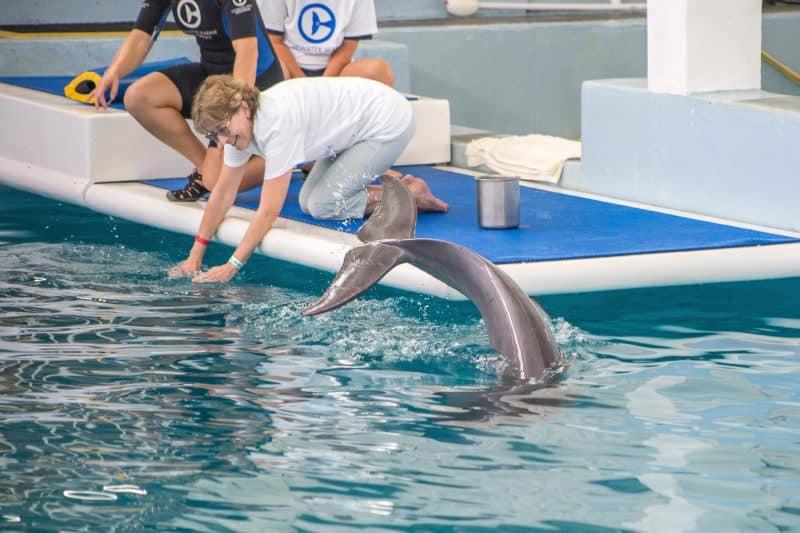 Clearwater Marine Aquarium FINALS-3