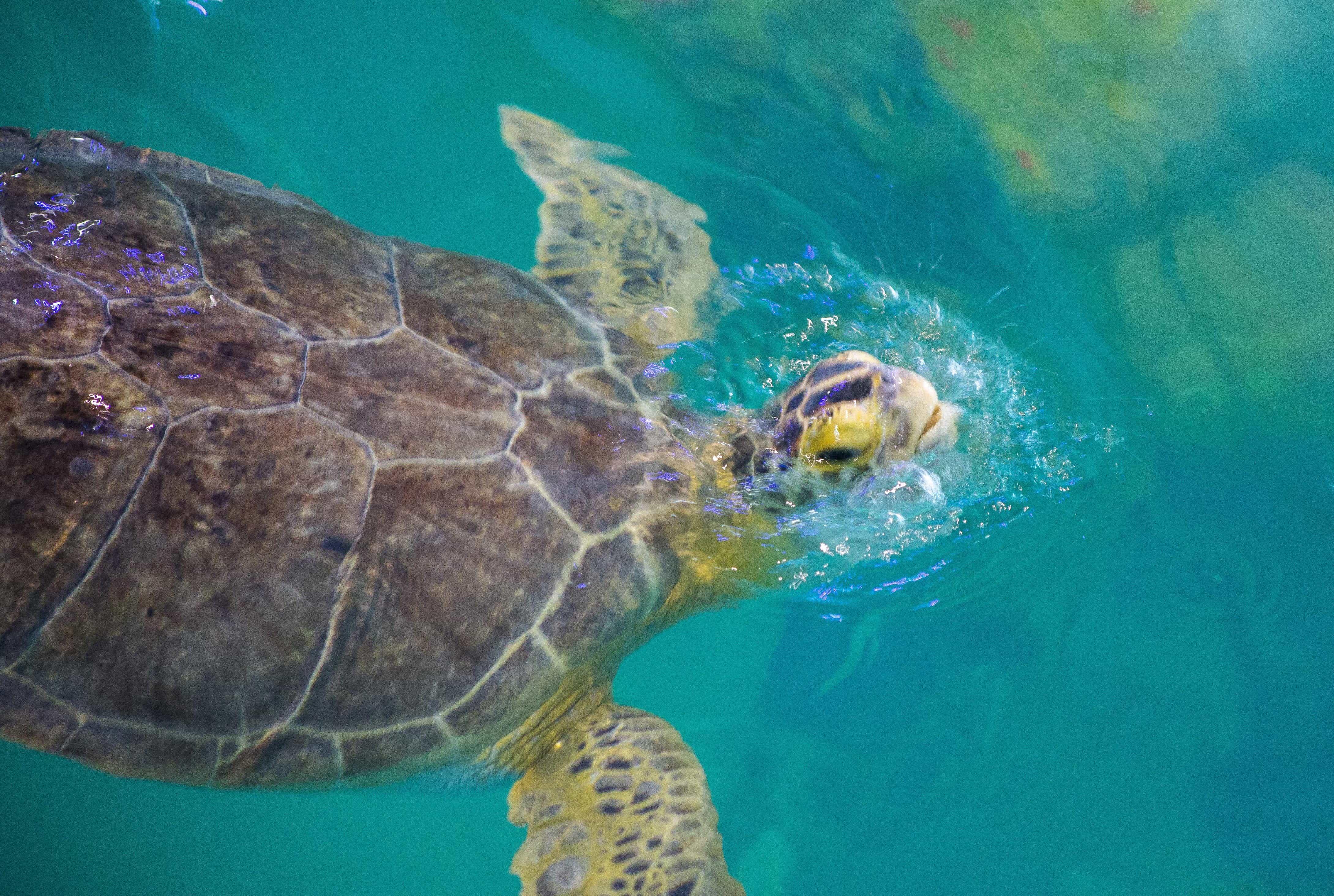 Clearwater Marine Aquarium FINALS-4 - Saving Room for Dessert on