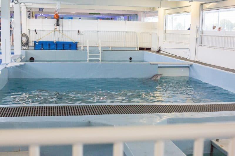 Clearwater Marine Aquarium FINALS-6