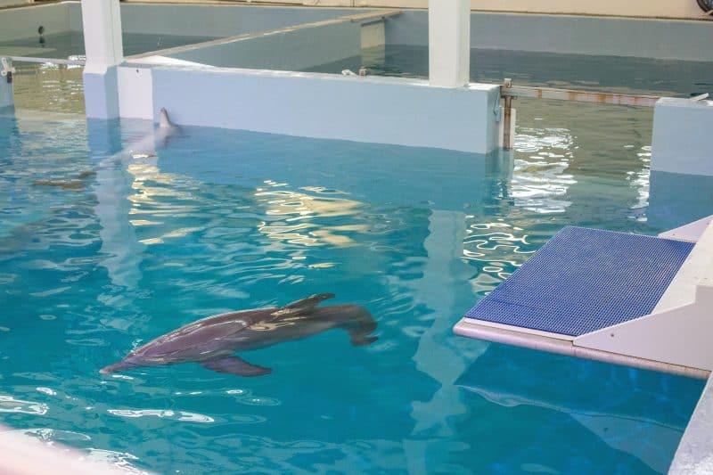 Clearwater Marine Aquarium FINALS-9
