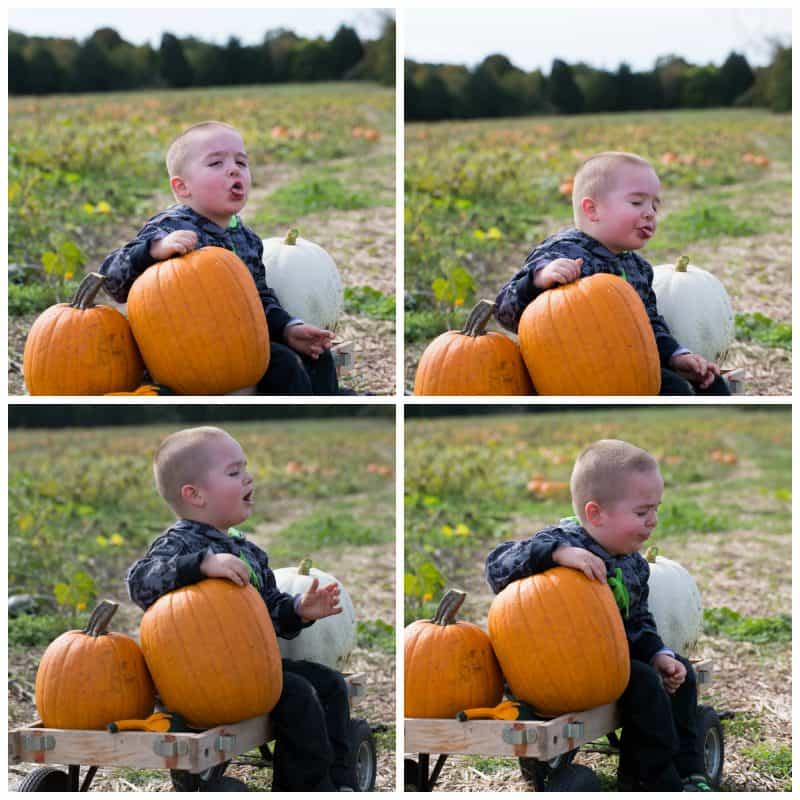 PumpkinLicking