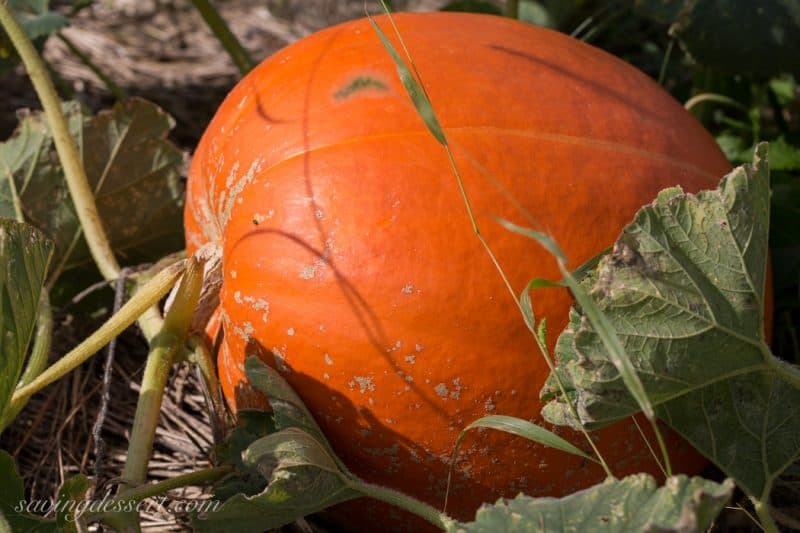 Pumpkins & Gourds October 2015