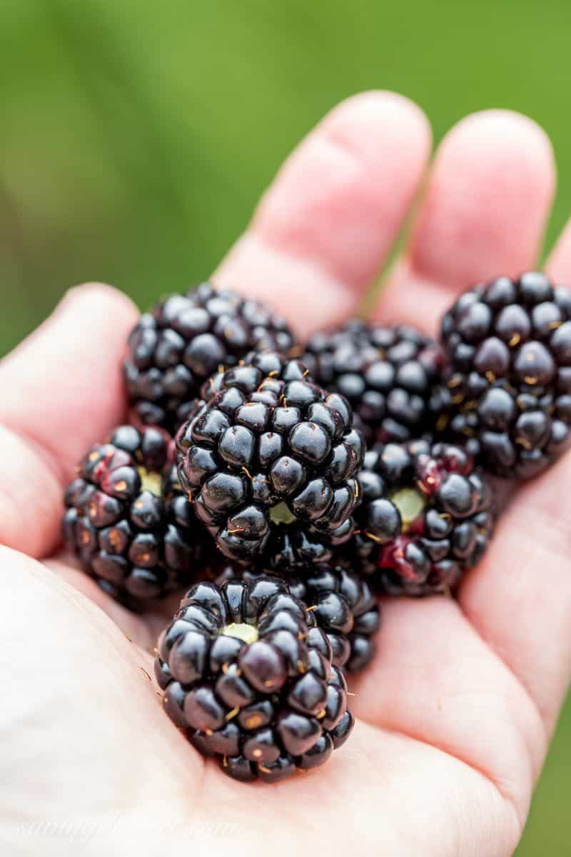 Homegrown blackberries ~ www.savingdessert.com