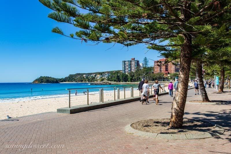 People walking dogs on Manly Beach near Sydney Australia