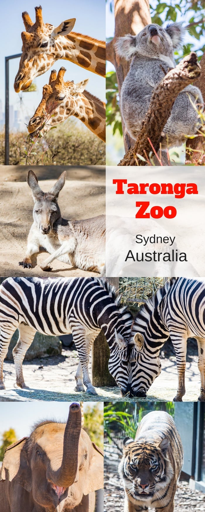 A collage of animals from the Taronga Zoo in Sydney Australia