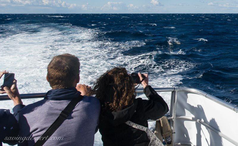 Dolphin watching tourists on a ship near Sydney Australia