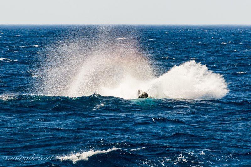 Jumping whale splash near Sydney Australia