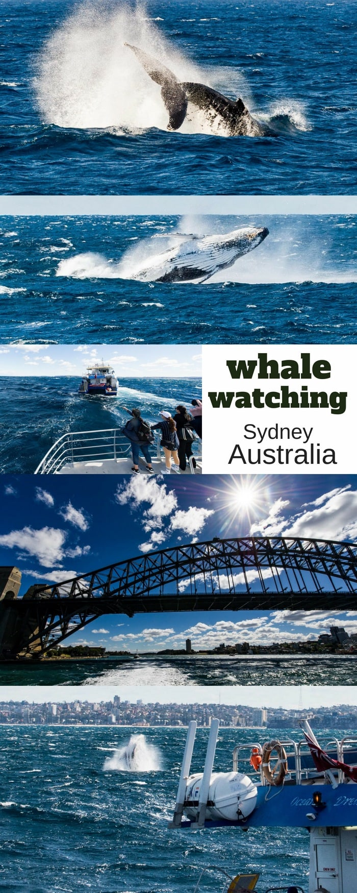 Whale Watching Sydney with travel tips to help you have the best possible adventure. Don't miss this amazing exerperience in the land down under! #whalewatching #whalewatchingsydney #sydneywhalewatching #australiawhales #sydney #australia #sydneyadventure